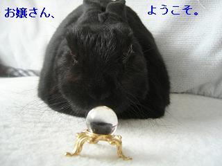 ショコラちゃん占い1.JPG
