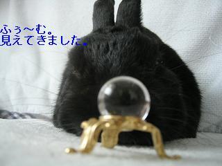 ショコラちゃん占い4.JPG