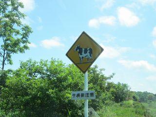 牛横断.jpg